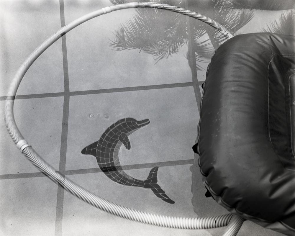 Tile Dolphin, 2015
