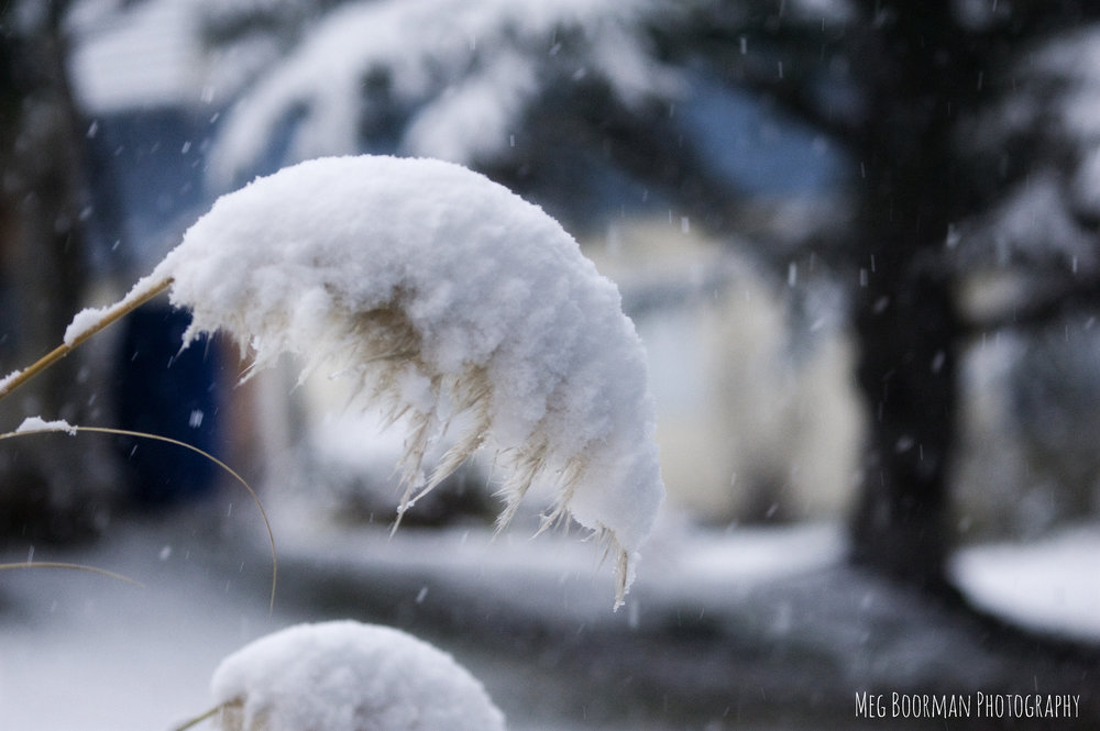 snowblog1.jpg