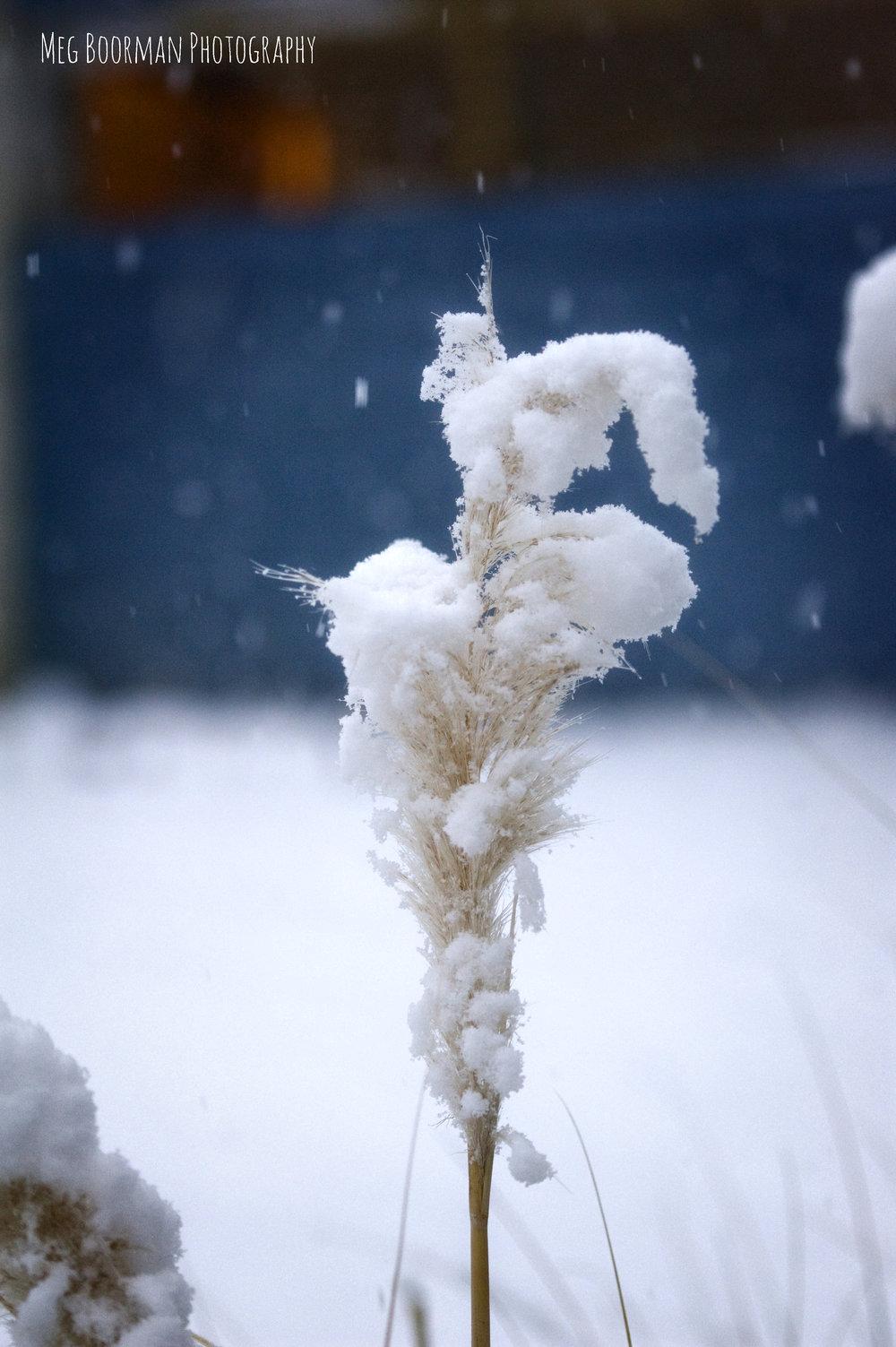 snowblog4.jpg