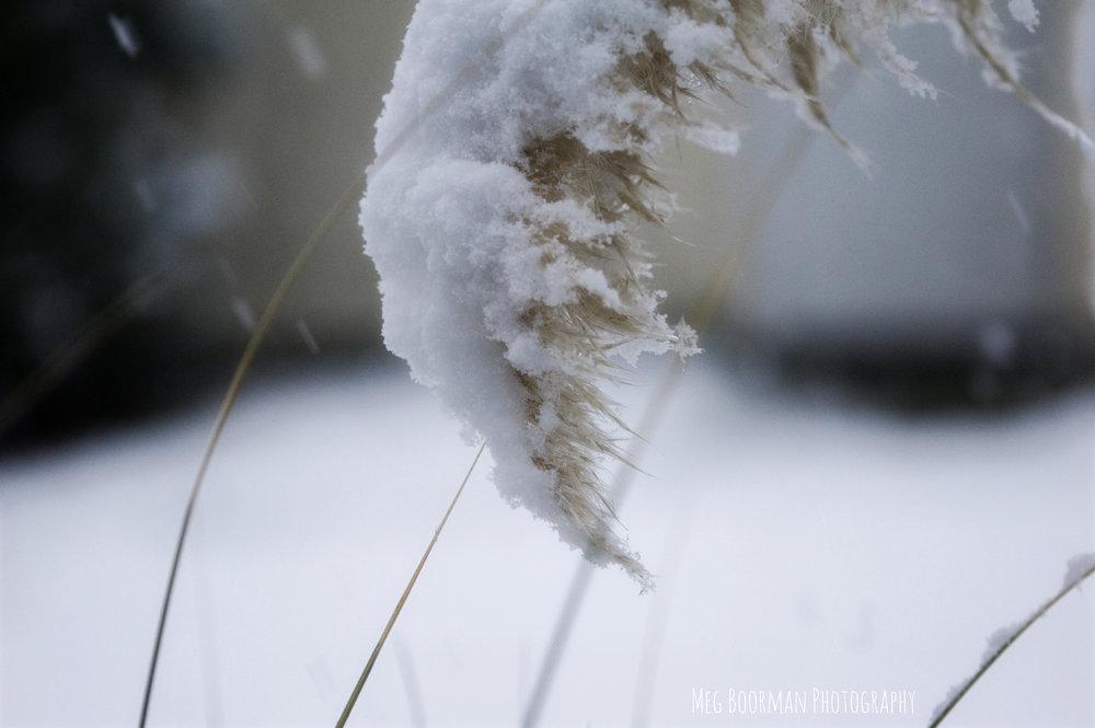 snowblog3.jpg