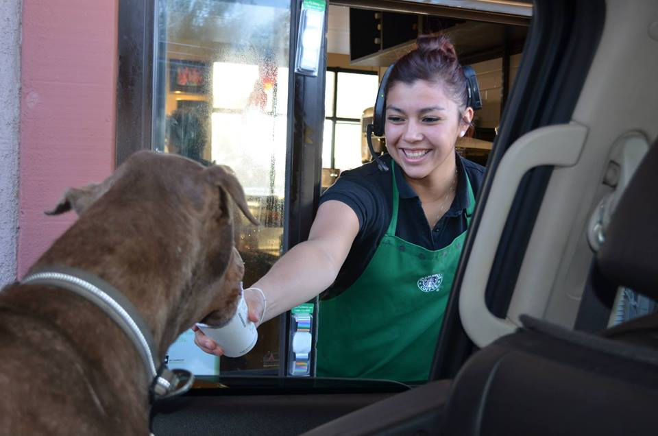 Bowie-loves-going-through-the-Starbucks-drive-thru1.jpg
