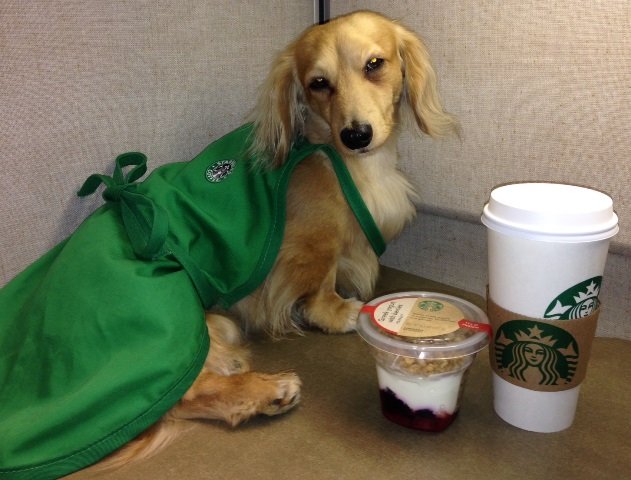 Jigsaw especially loves little things from the Starbucks Coffee Gear Store