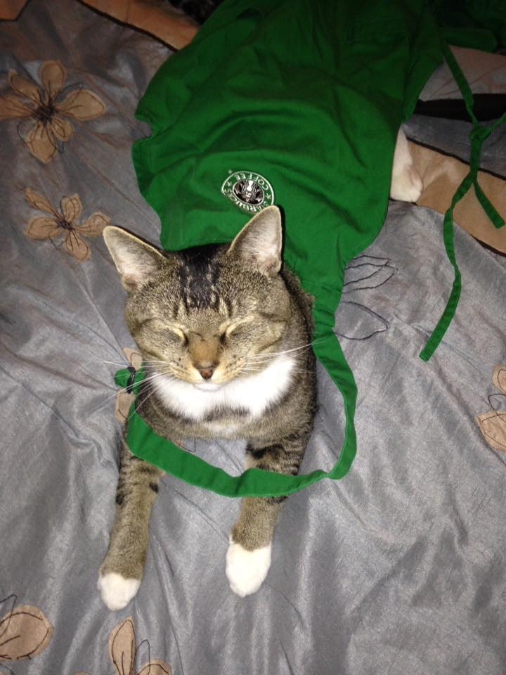 Meeko-wears-a-green-apron-pic-from-Shelby