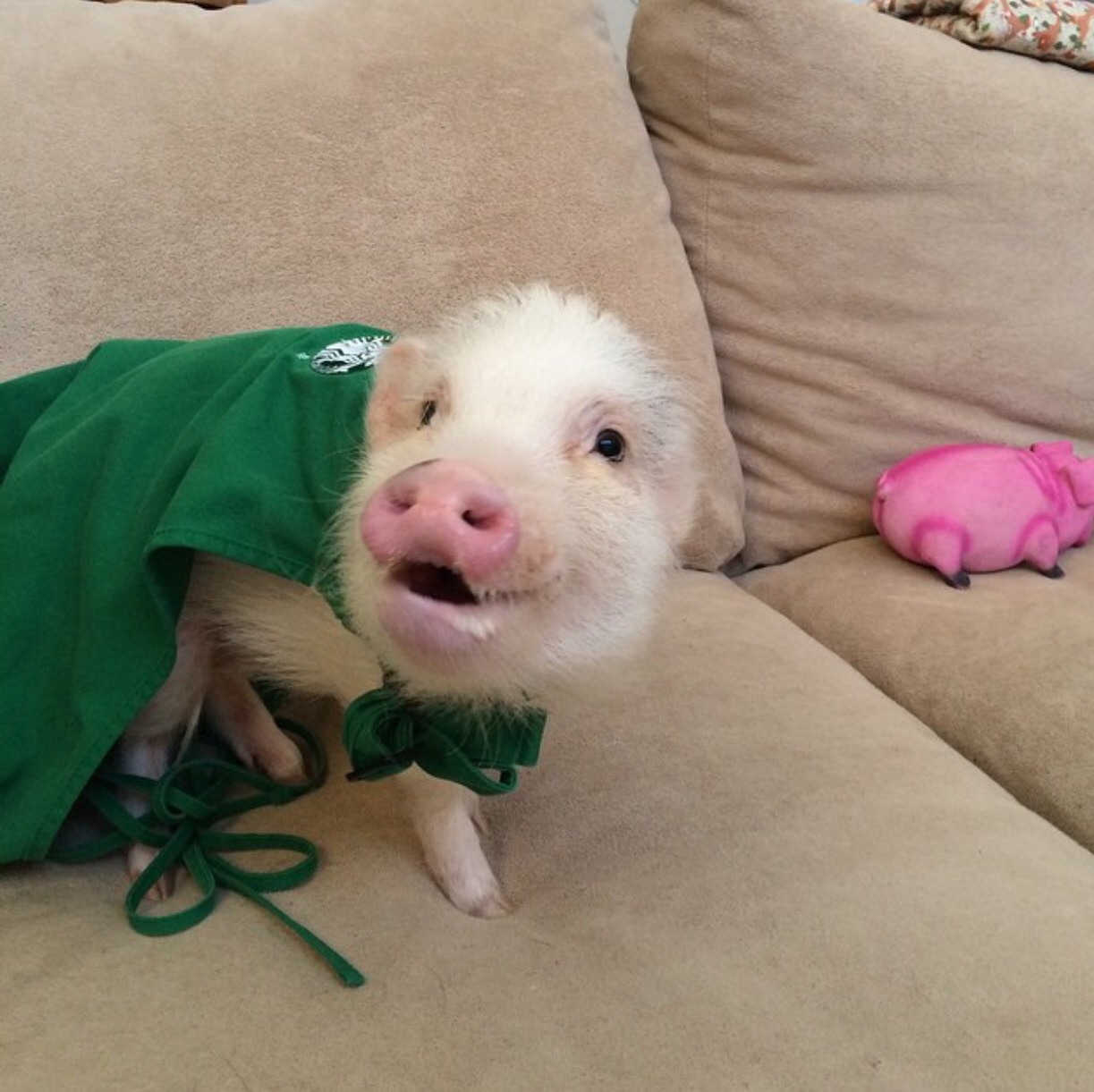 One piggy latte for me please!