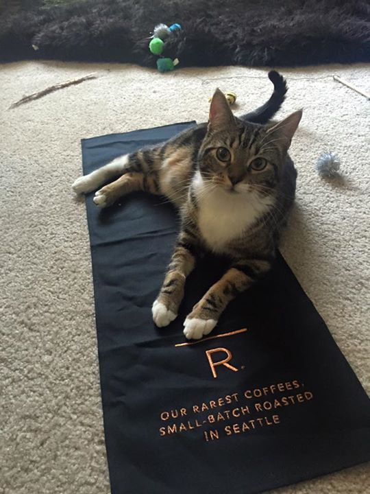 Roscoe is comfy on the Reserve towel
