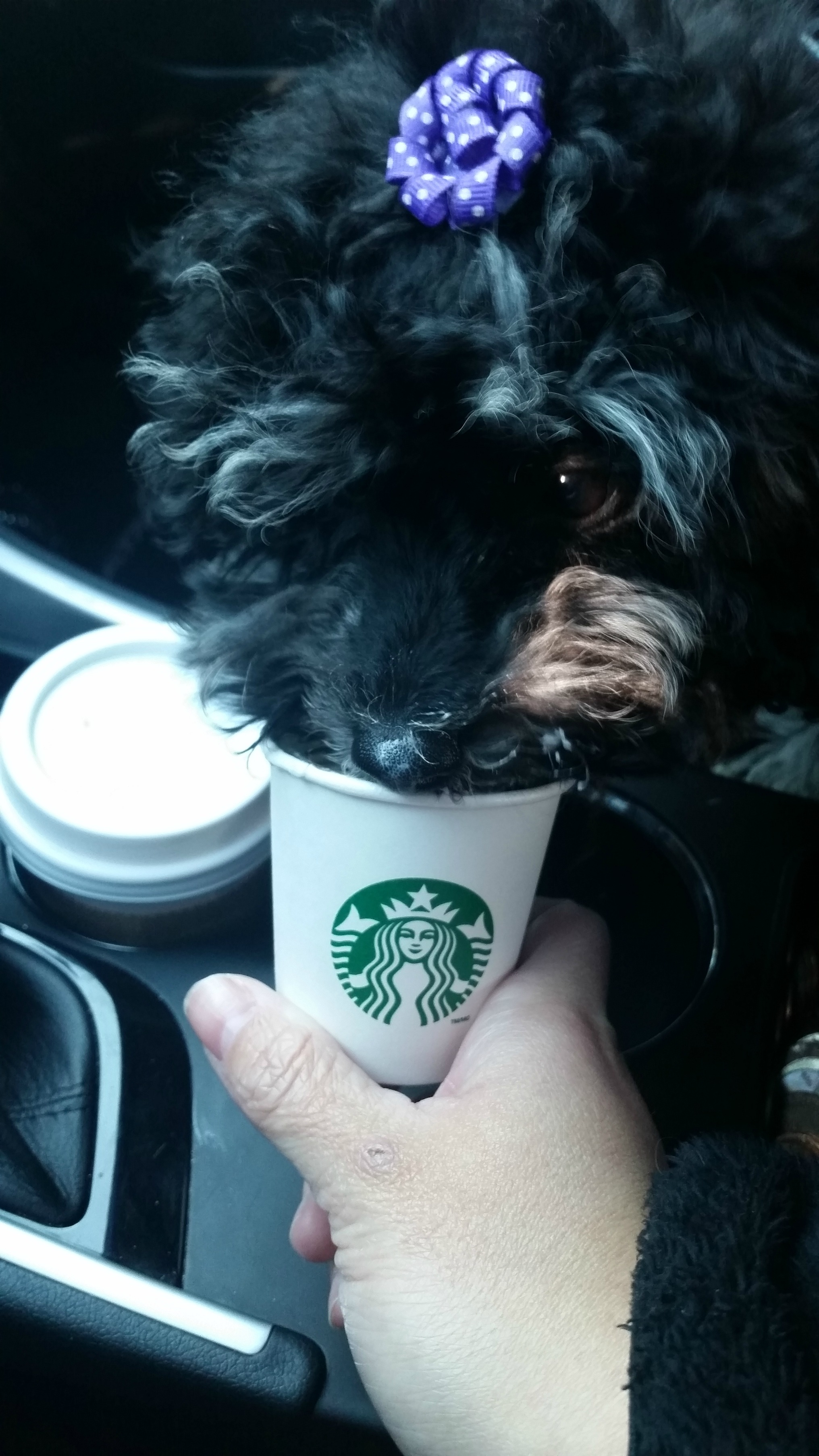 Wasabi loves Starbucks runs
