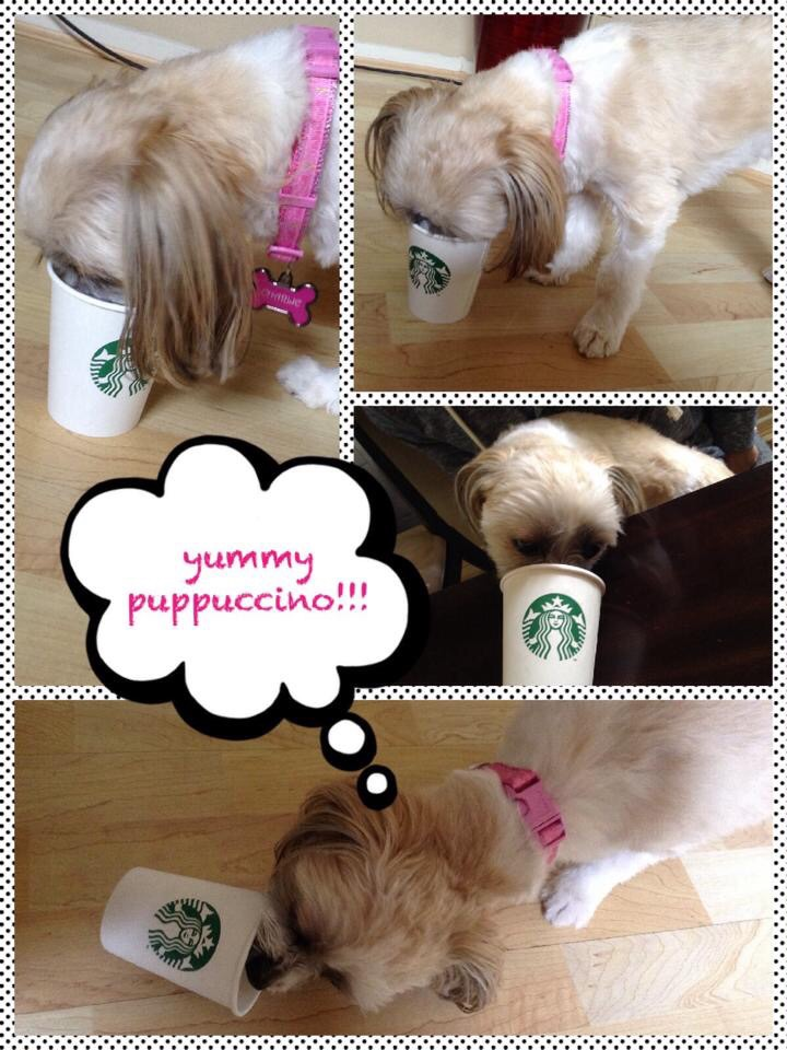 image-3 Charlie says yummy puppuccino