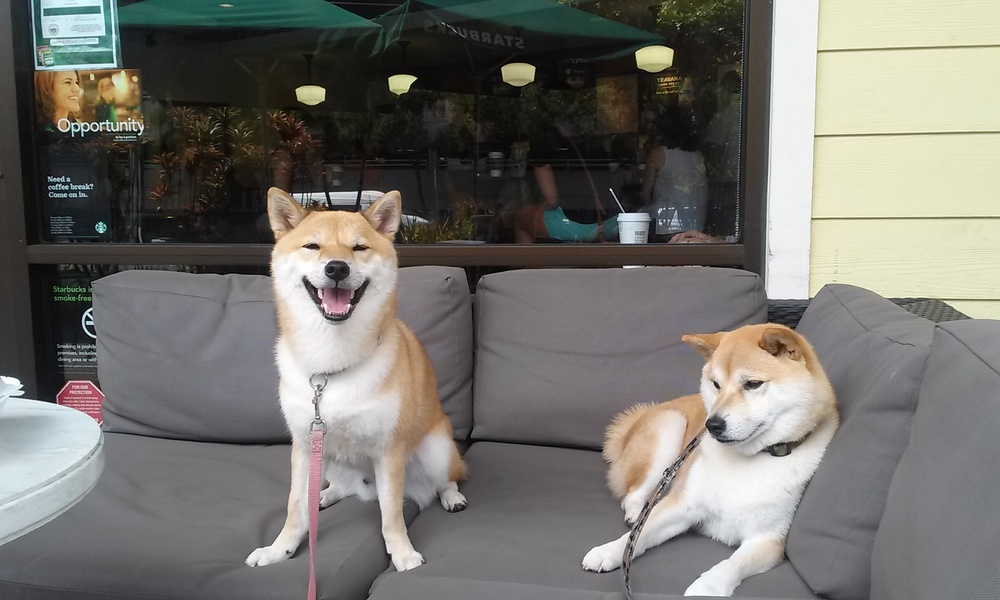CAM00386-Koda-and-Kuma-are-chillin-at-Starbucks.jpg