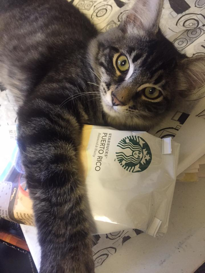 Cosmo Always Has His Paws on Great Coffee