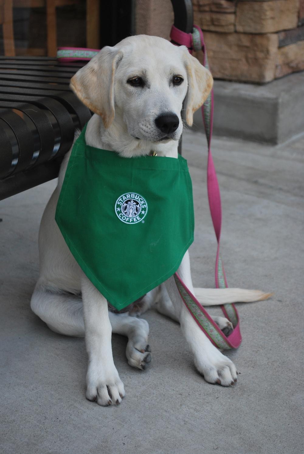 DSC_0176-1-Morgan-in-Moreno-Valley-Starbucks.jpg