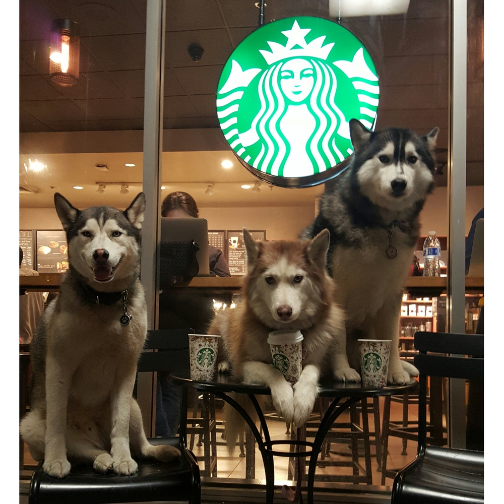 PhotoGrid_1443585755202-The-Husky-Trio.jpg