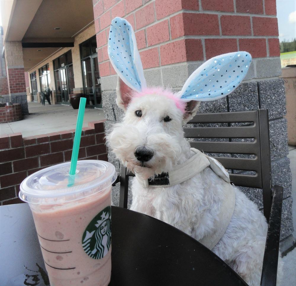 1 - 1 - DSC01746 wearing stupid ears at Starbucks