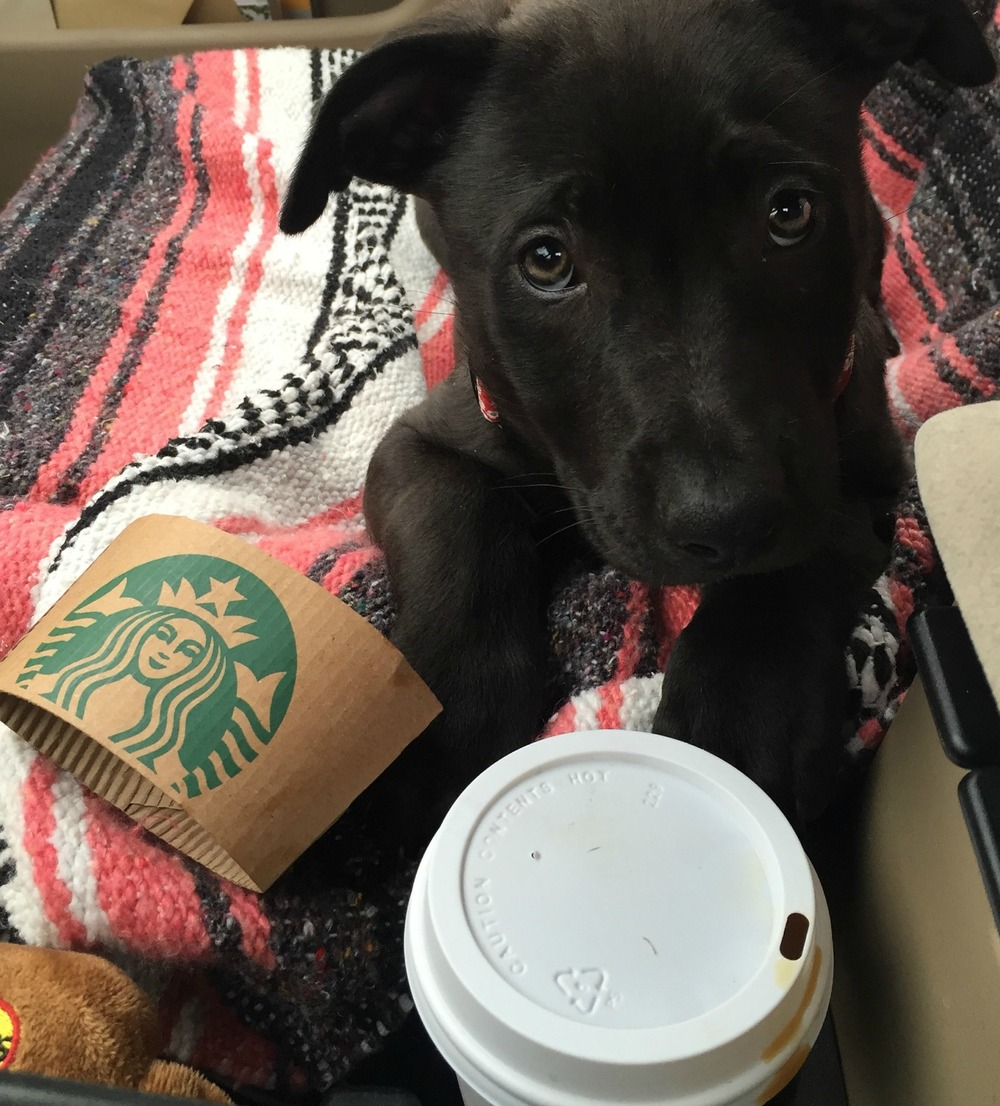 image-2-Sadie-Belles-first-Starbucks-run.jpg