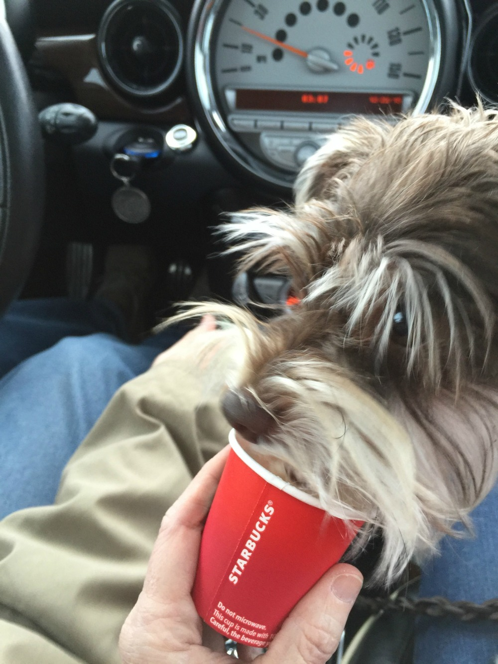 1-1-image-Tex-gets-a-puppuccino.jpg
