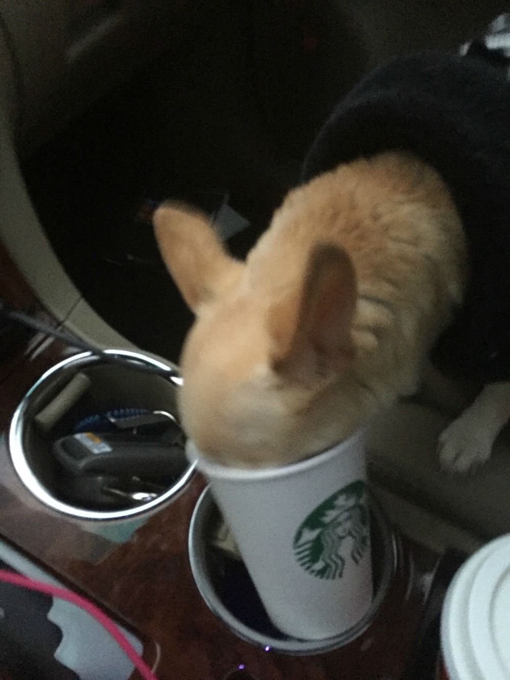 image-2-Gypsys-first-puppuccino.jpg