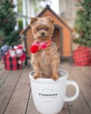 Big cup of love! A Starbucks partner submitted this pic to http://coffeehousepaws.com- link in profile. Very cute! #petsofstarbucks #starbuckspartners #dogsofinstagram #starbucksmug