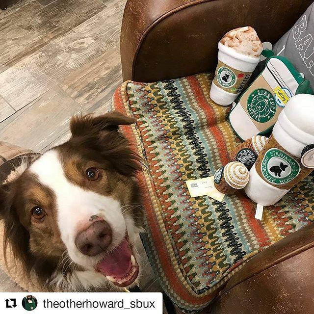"#Repost @theotherhoward_sbux (@get_repost) ・・・ ""Wrap'em up, we'll take all of them"" #starbucks #petsofstarbucks #pupachino #pupkinspicelatte #starbarks #coffee #aussiedog #australianshepherd #redtriaussie #dogsandcoffee #luckydogbarkery #starbucksrun"