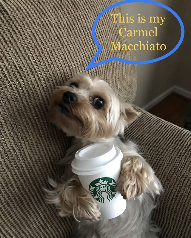 So cute! Thank you to Patrick who submitted this to me via the website http://www.PetsofStarbucks.com #petsofstarbucks #starbucks