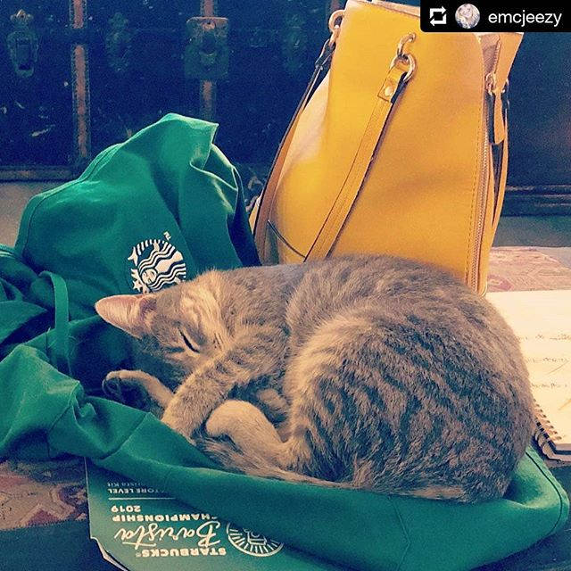 #catsofinstagram #petsofstarbucks #tobeapartner Any rational customer will overlook a little cat hair on your green apron!! #Repost @emcjeezy • • • So much for having a clean apron. #tobeapartner #catmomlife
