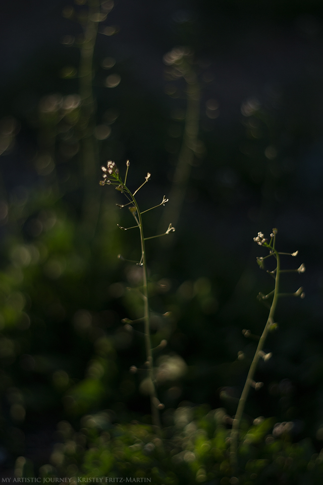 """""""Still Misunderstood"""" """"Weeds are flowers too, once you get to know them."""" - A. A. Milne"""