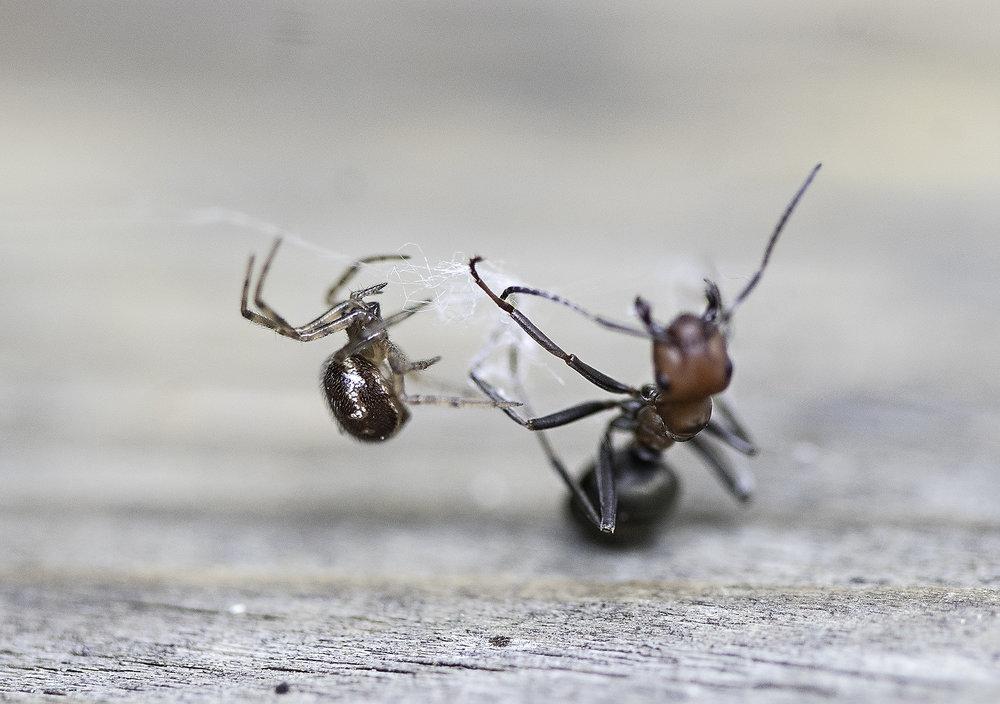 bug10.jpg