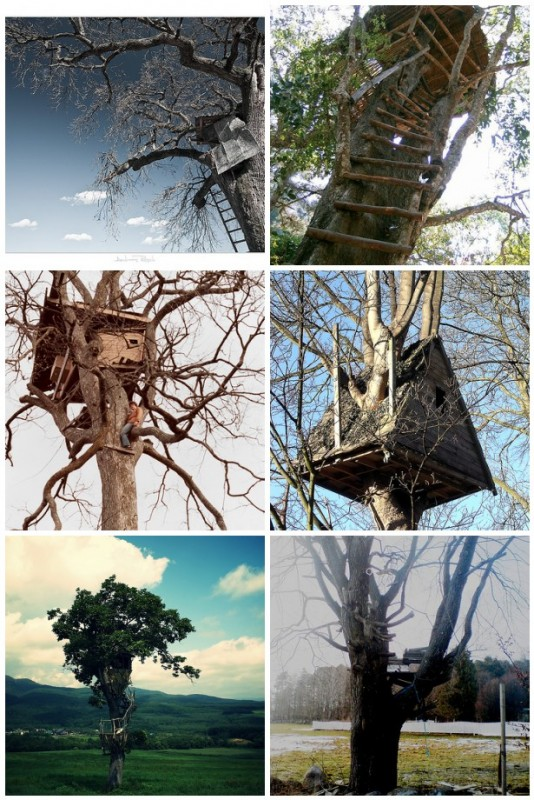 Dreaming of Treehouses