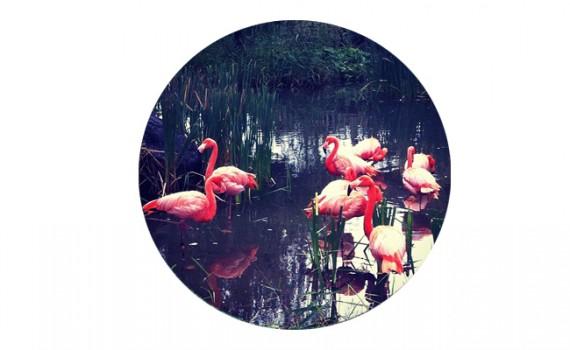 flamingo || Christina Rosalie