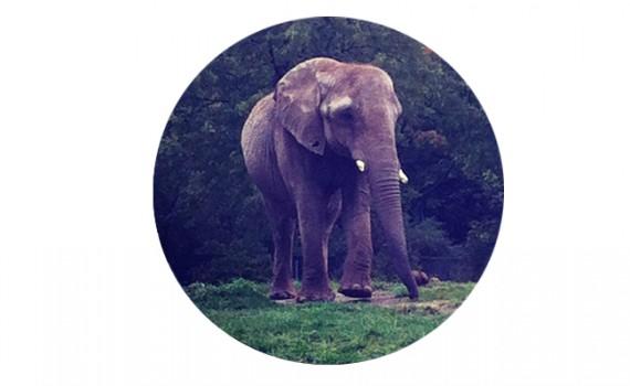 elephant || Christina Rosalie