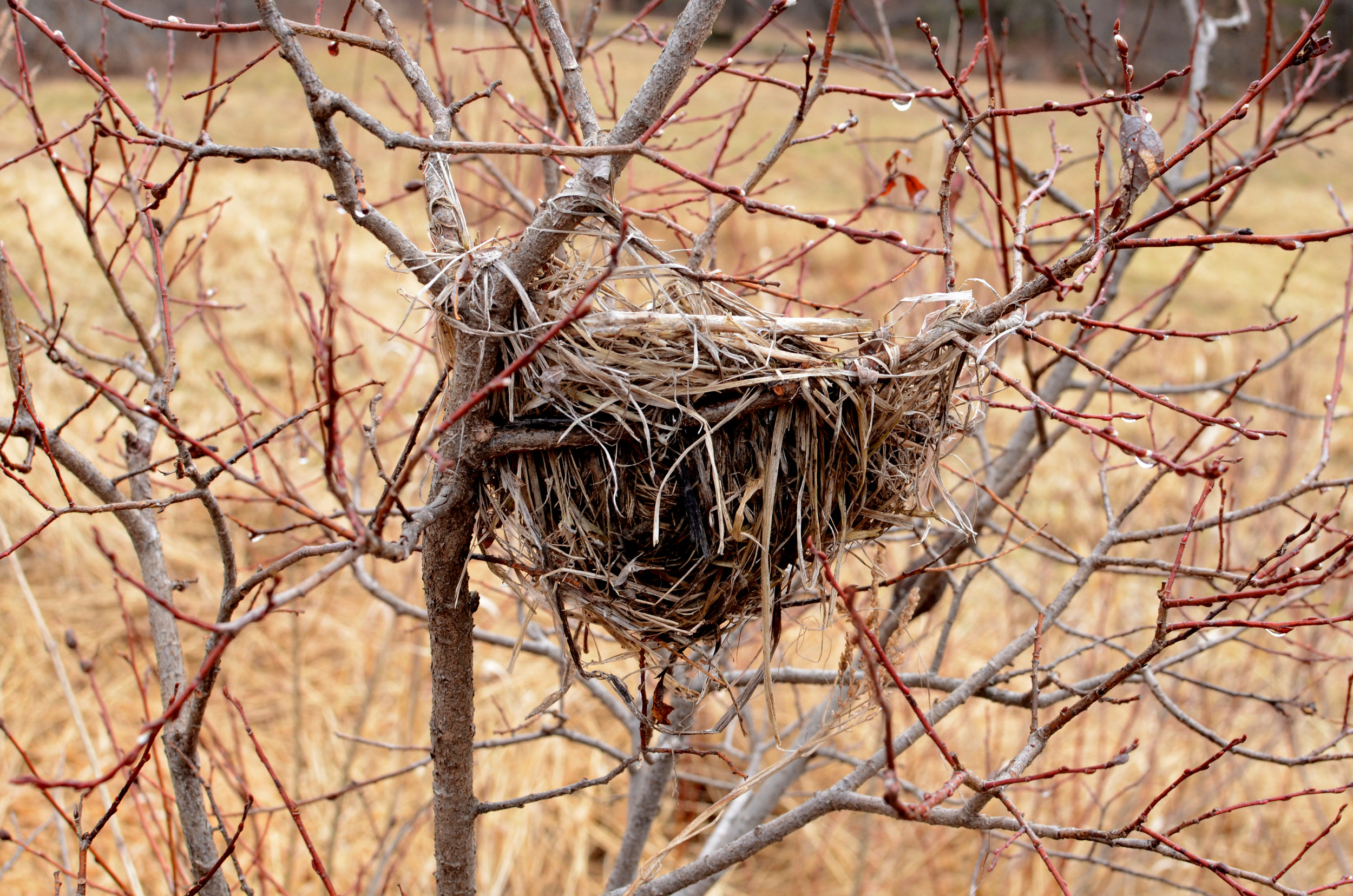 Empty nest - Christina Rosalie