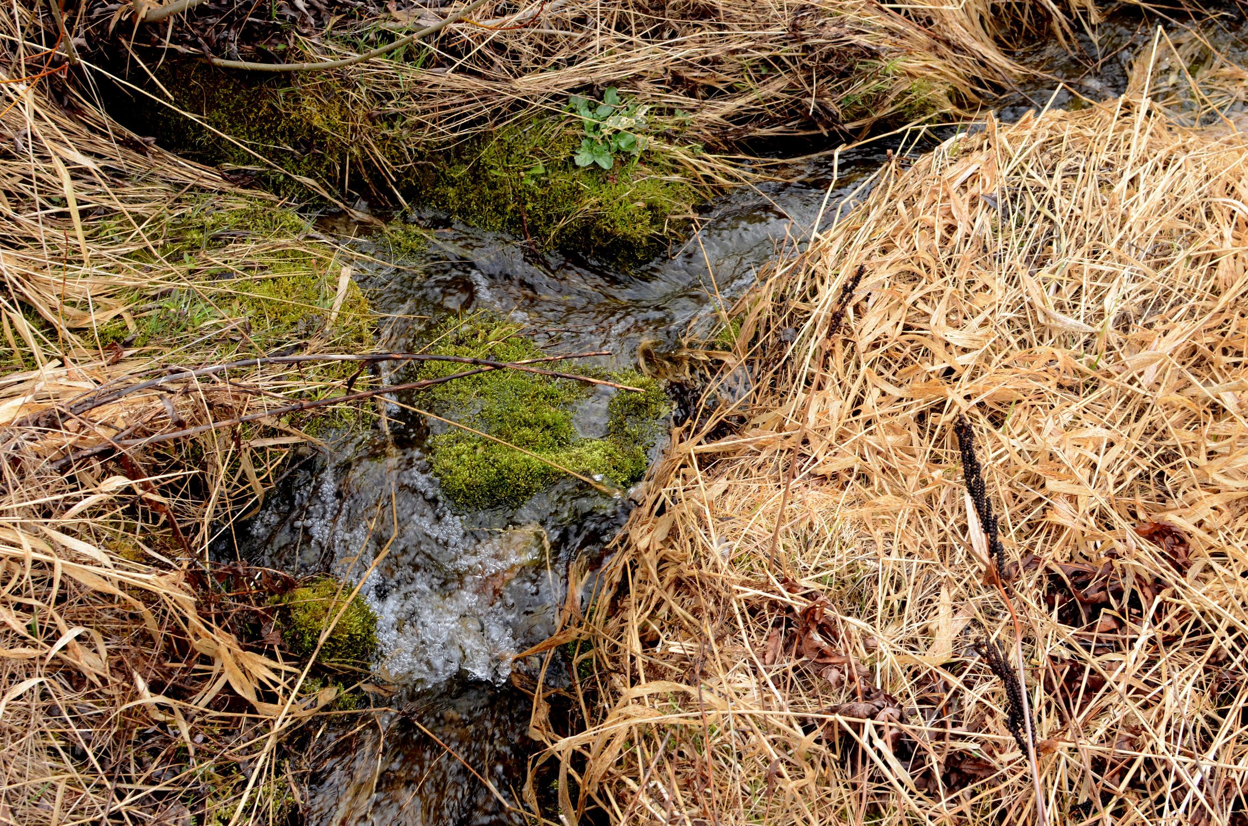 Springtime In Vermont - Christina Rosalie