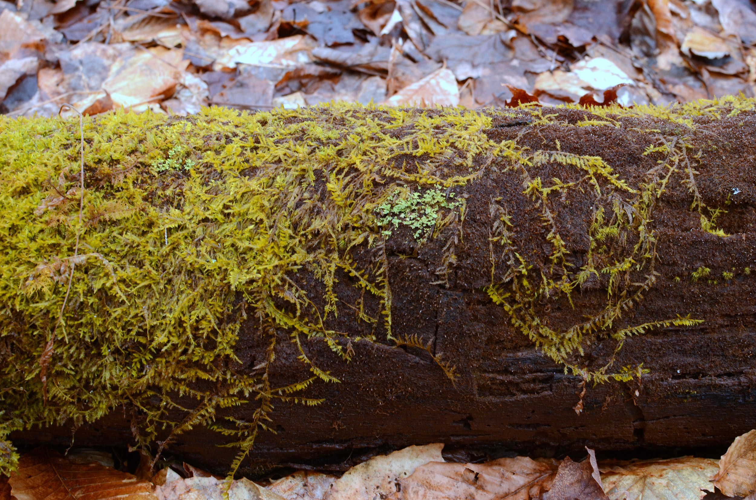 Moss on log - Christina Rosalie