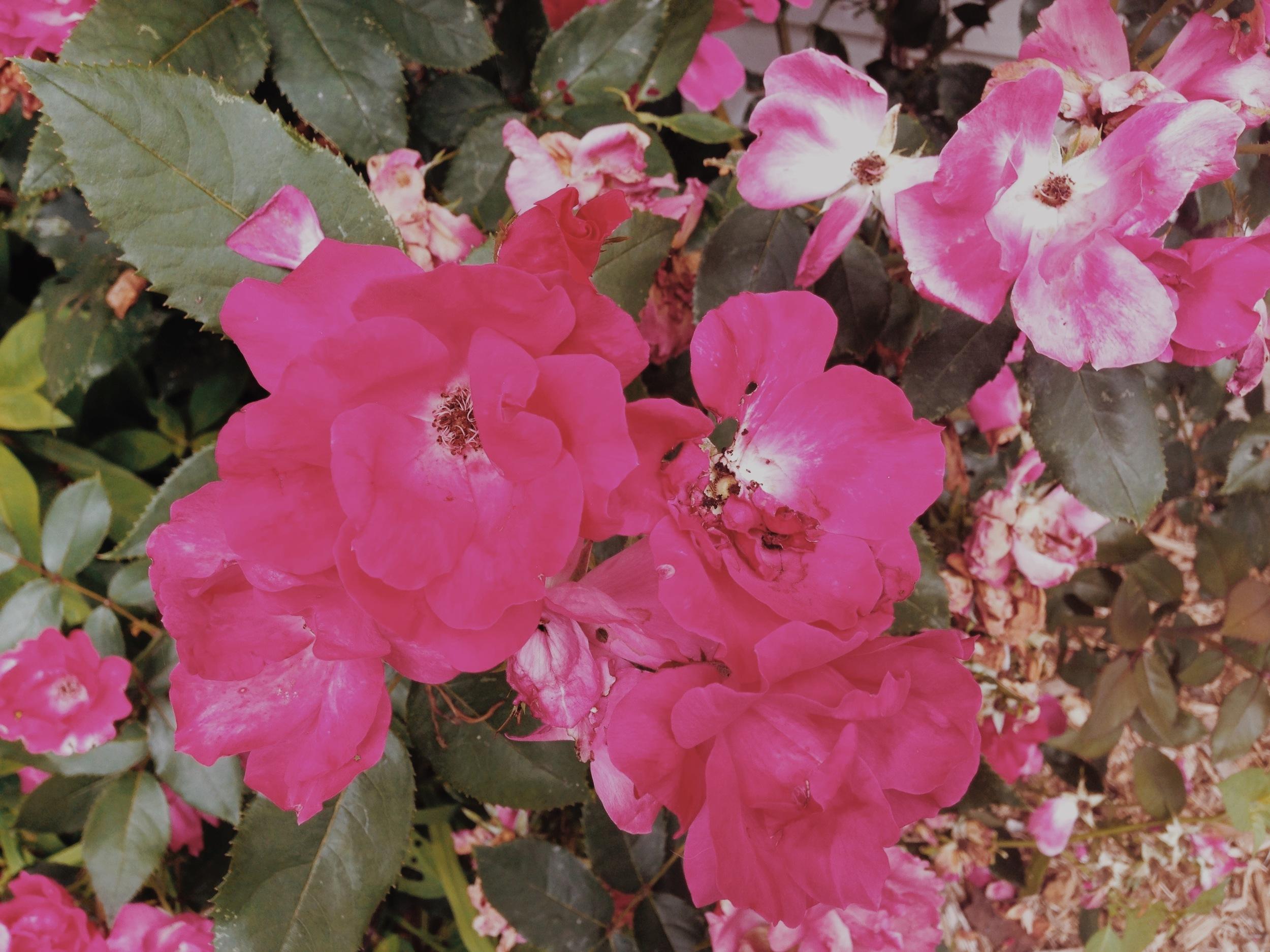 wild_blooms 2