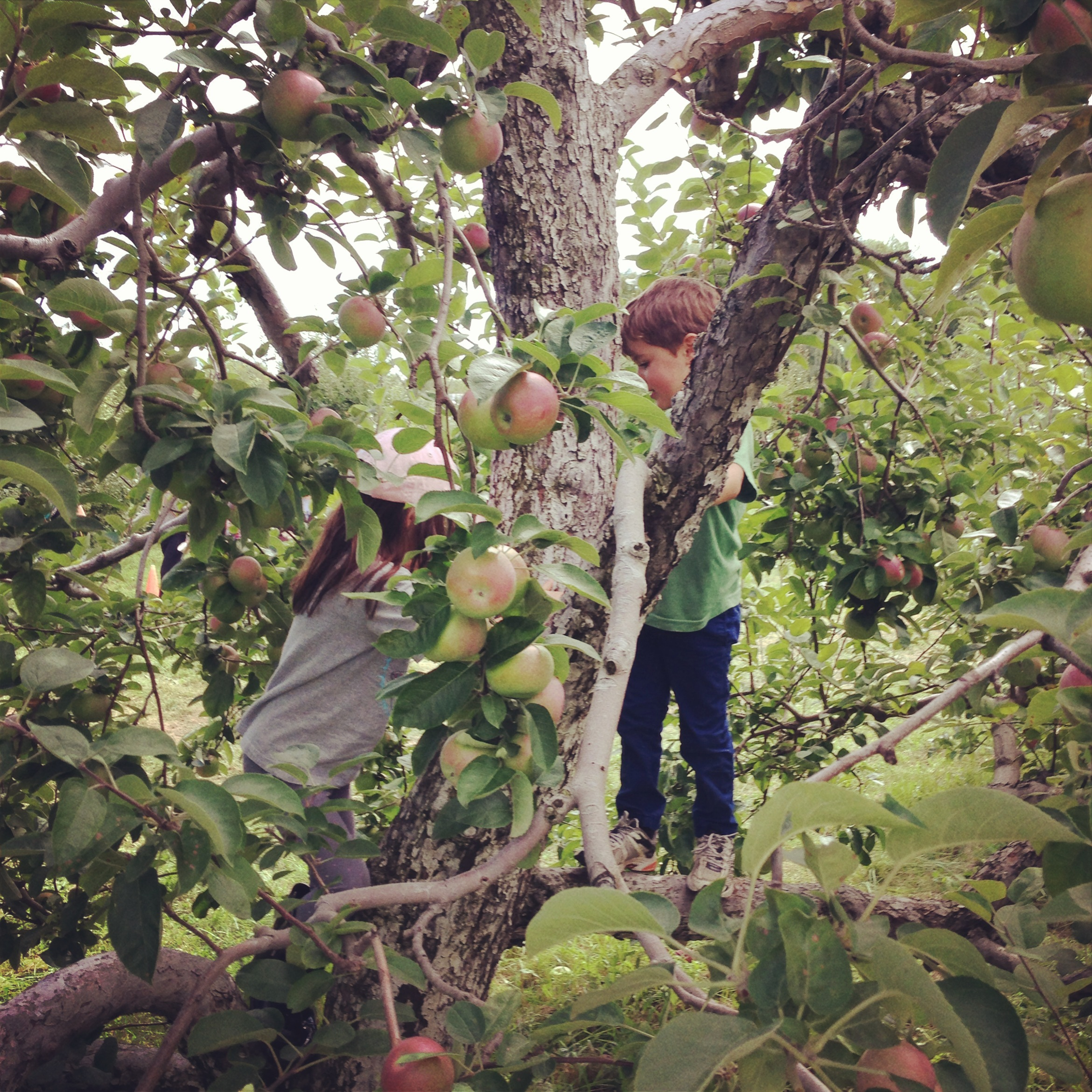 September_applePicking