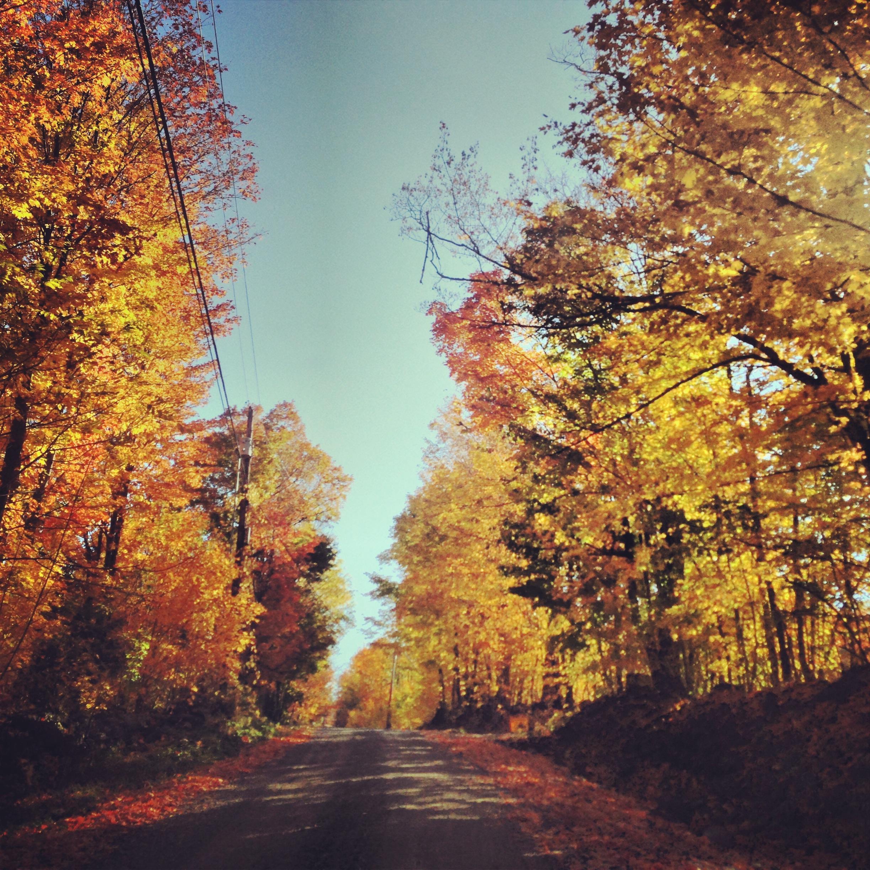 October_Foliage