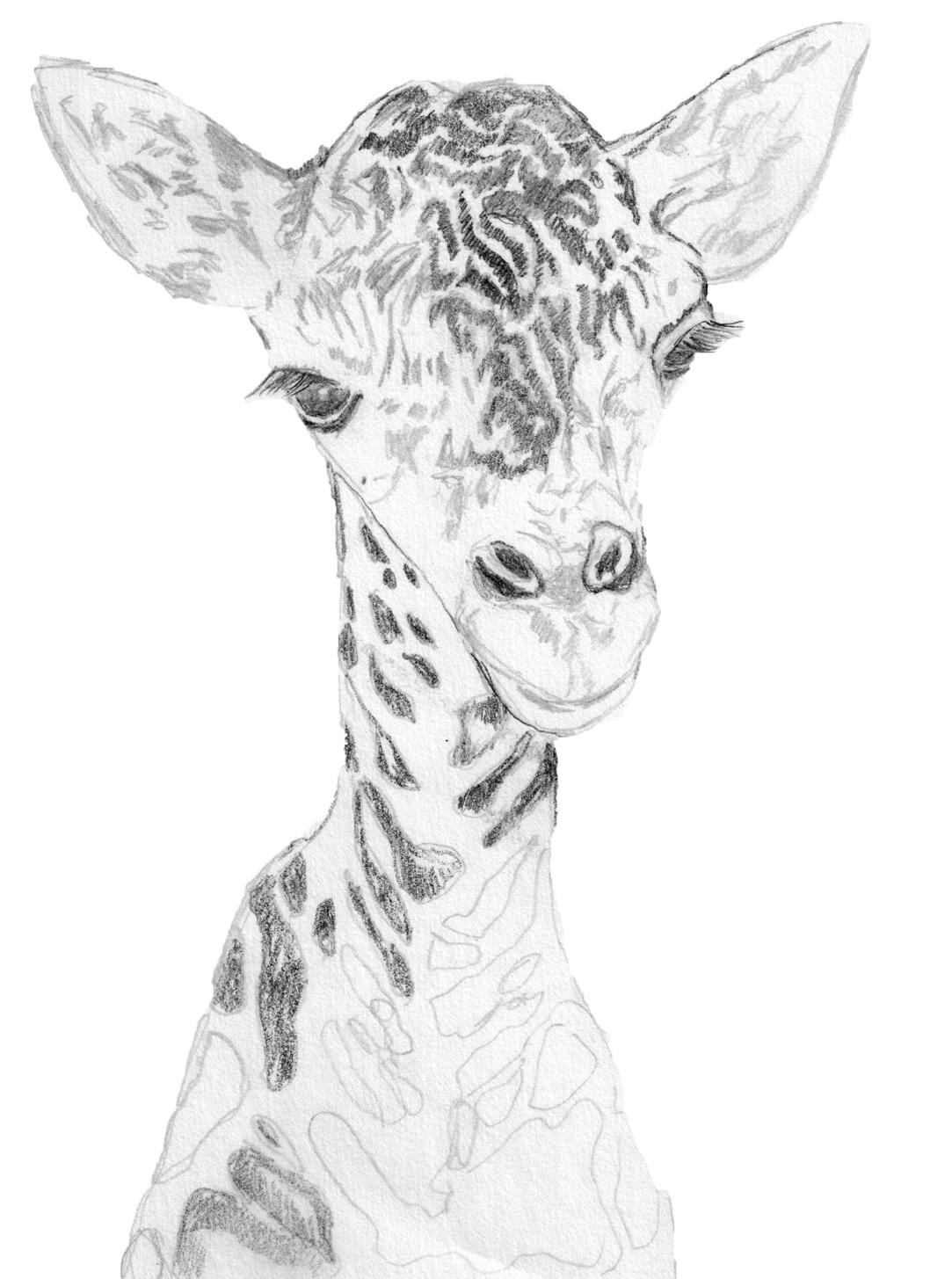 Giraffe - Christina Rosalie