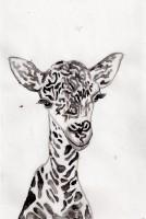 08-Giraffe