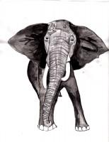 09-sweet elephant
