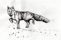 10-SnowyFox