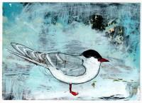18-Stalwart Gull