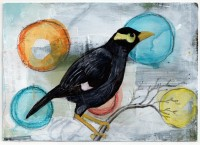 21-Mynah Bird