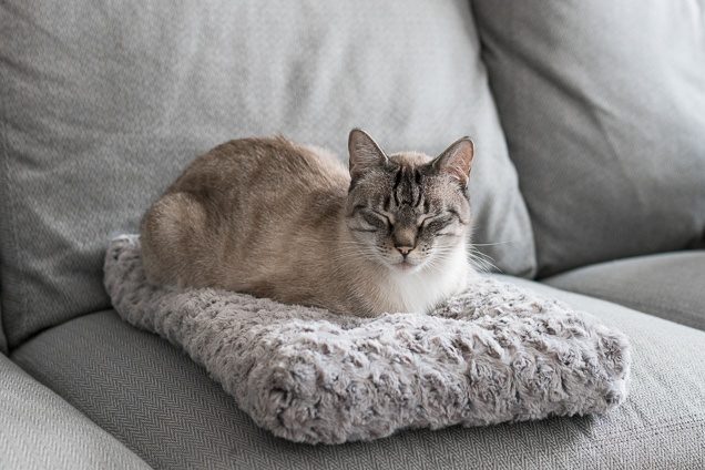 catbeds-lowres-05926.jpg