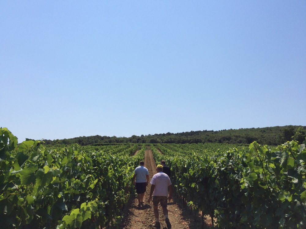 Among the vines in Limoux