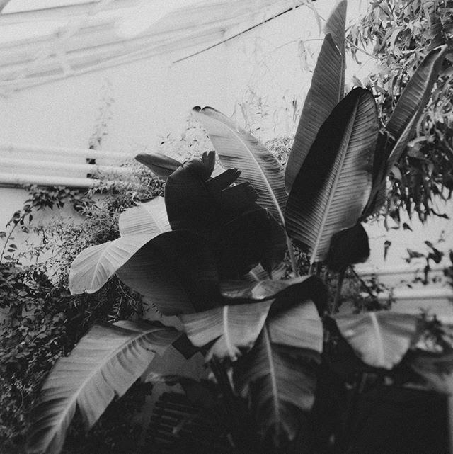 A plant series 🔍🌿