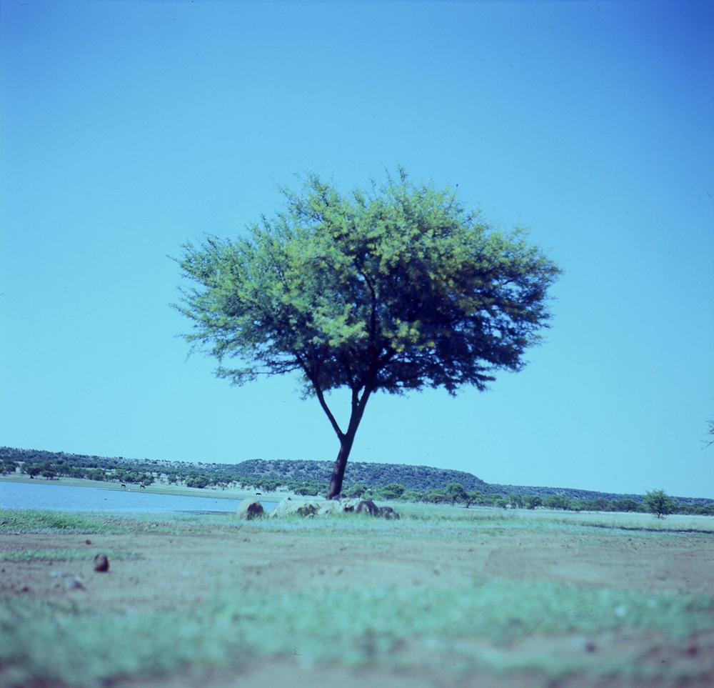 doringboom02.jpg