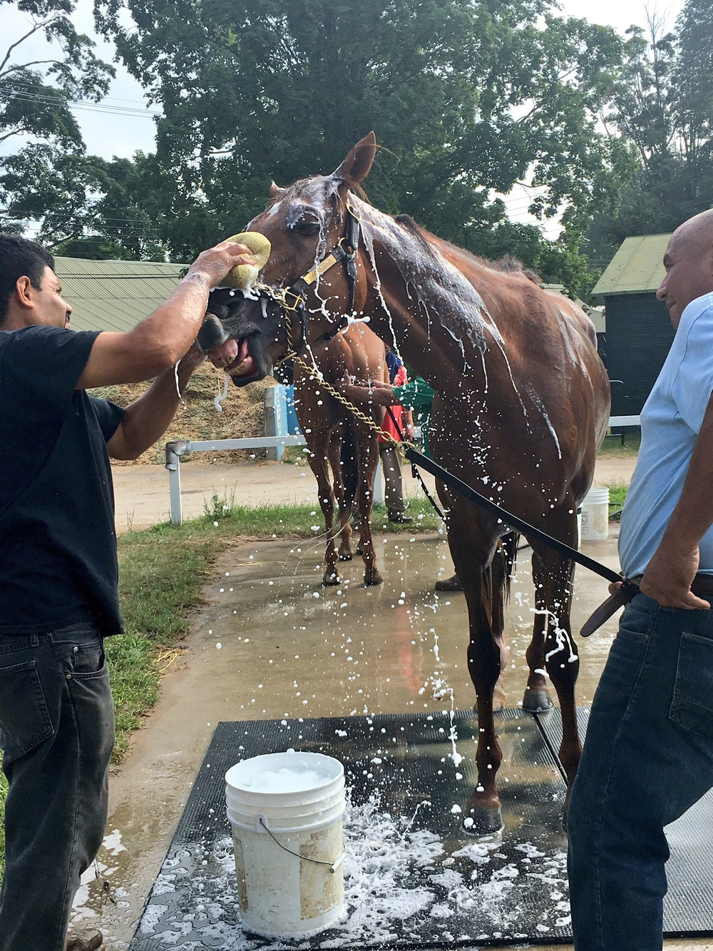 Cliffs of Dover getting his after work bath