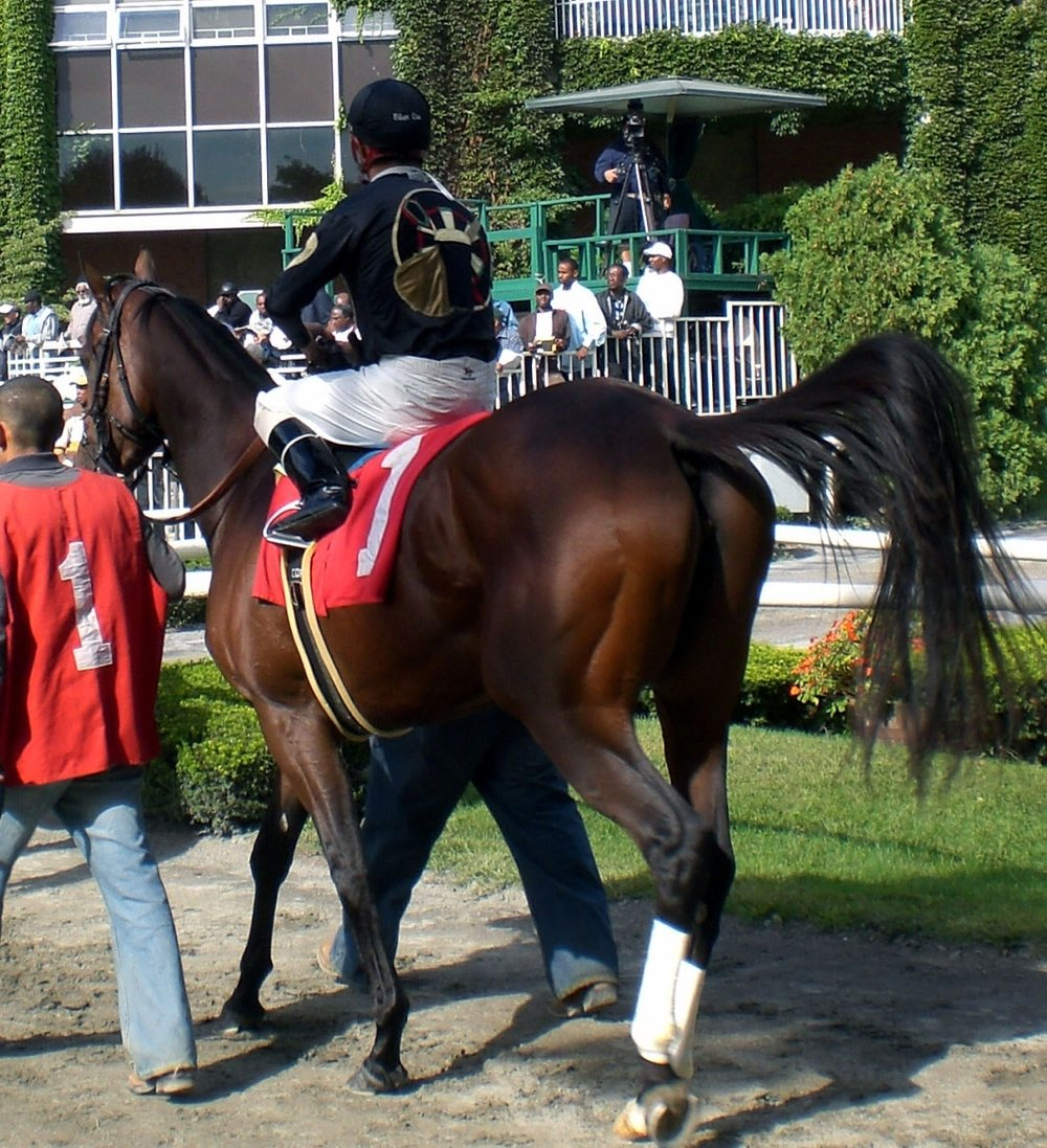 Cute Cognac at Belmont.jpg