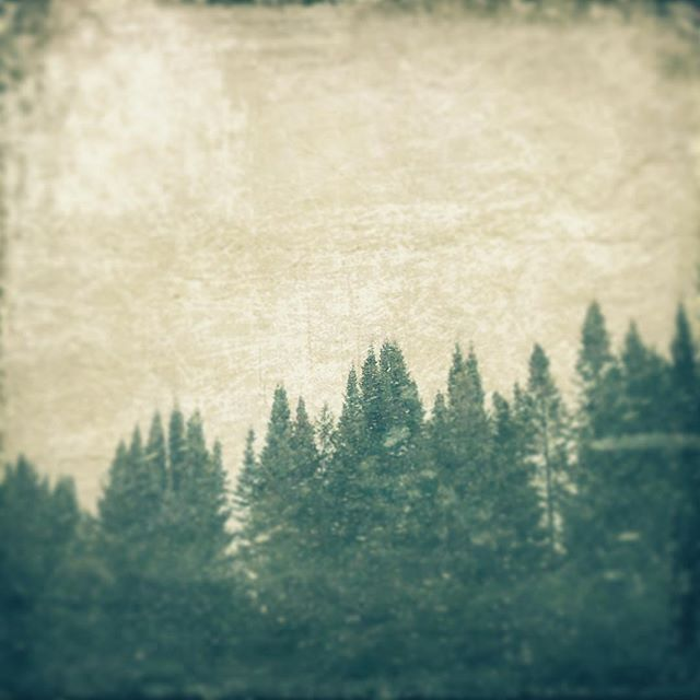 Winter Pines #pines #photography #tincatstudio #imagesbylee #textures #distressedfx #winter #everything_imaginable #everythingeverything #discovernature #getoutside #winterpines #texture moody_nature #ig_alls #artistry_flairs  #artistry_flair #splendid_shotz #masters_in_artistry #illustrious_art  #altered_nature #country_features #grammercollective #bns_nature #travel_wisconsin