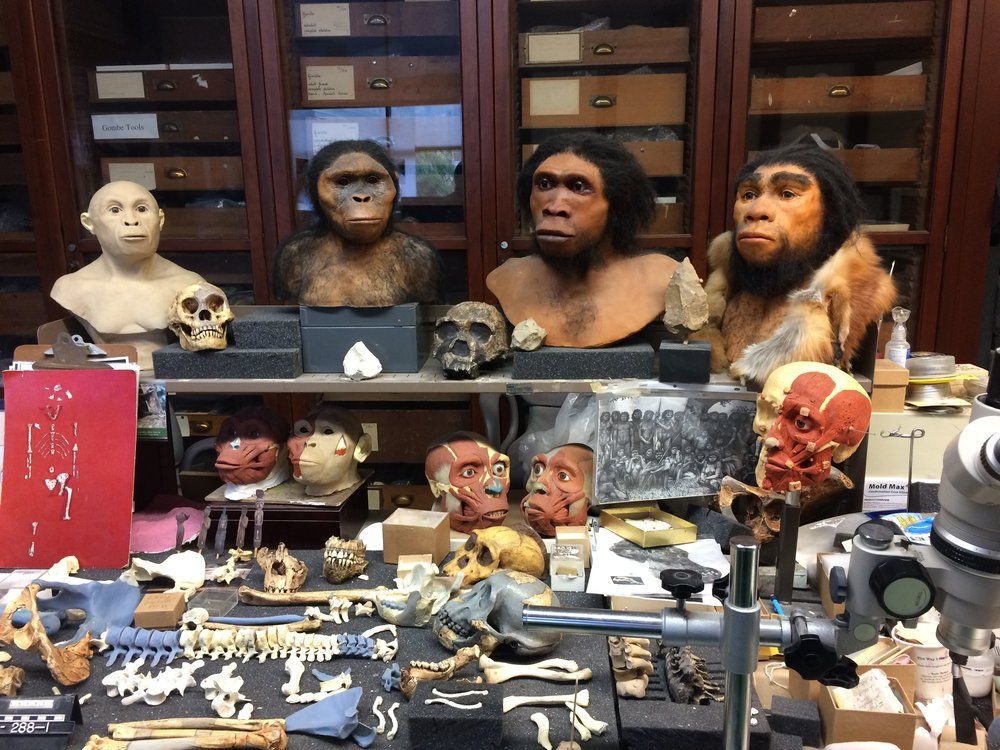 A workshop in the offices of Ian Tattersall, curator emeritus of Human Origins at the American Natural History Museum in the Anthropology Division