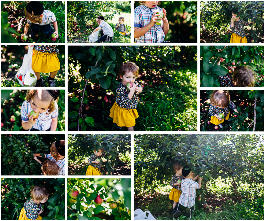 Milwaukee-family-photographer-apple-picking.jpg