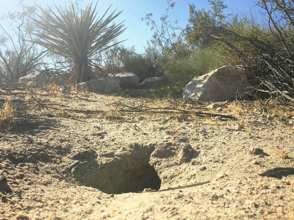 thumbnail desert.jpg